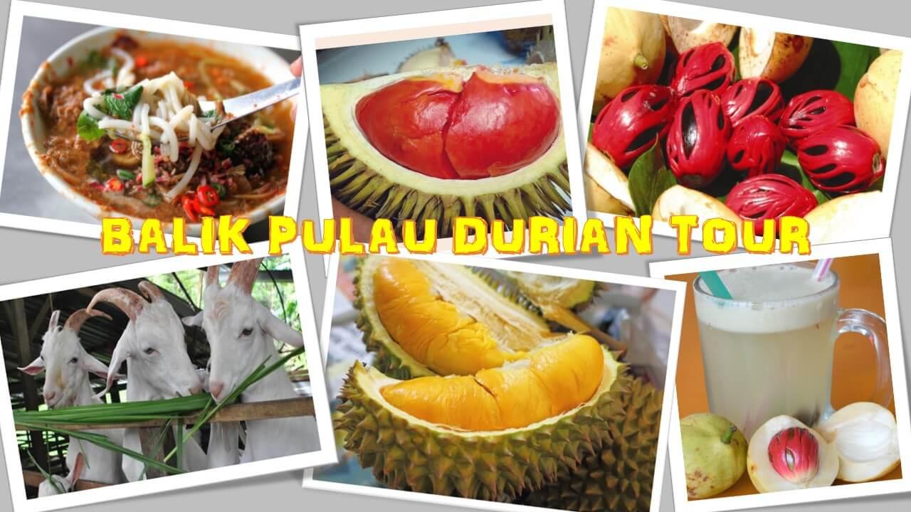 Balik Pulau Durian Tour Full Day