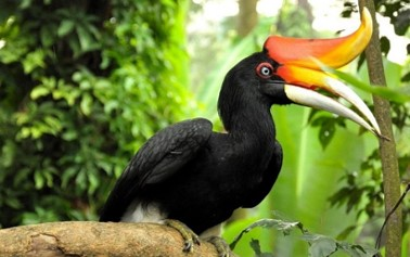 Kuala Lumpur Lake Garden Bird Park Tour