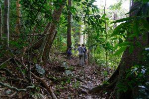 langkawi jungle trek