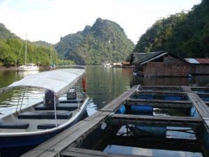langkawi mangrove fish farm