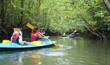 langkawi mangrove kayak